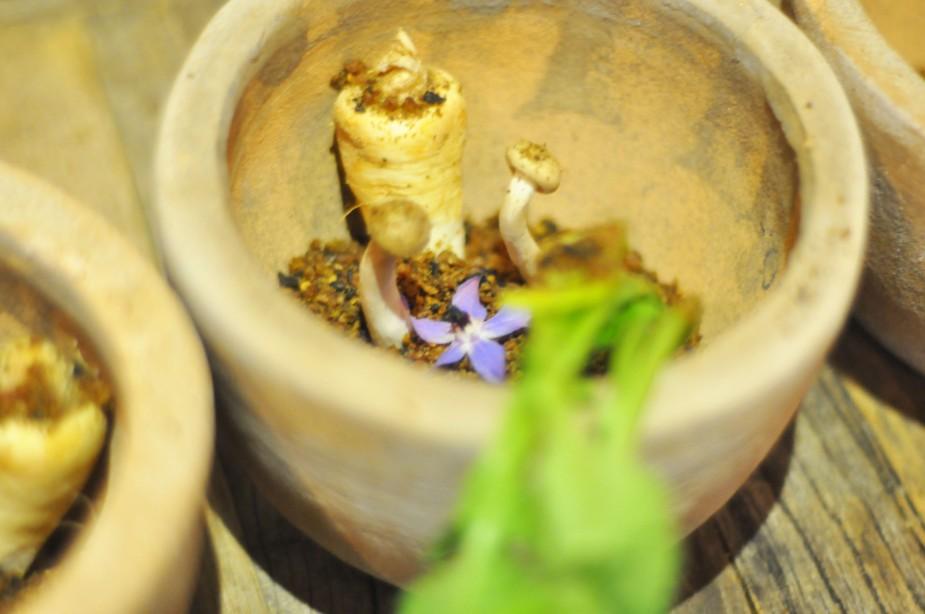 spiselig hage (2)